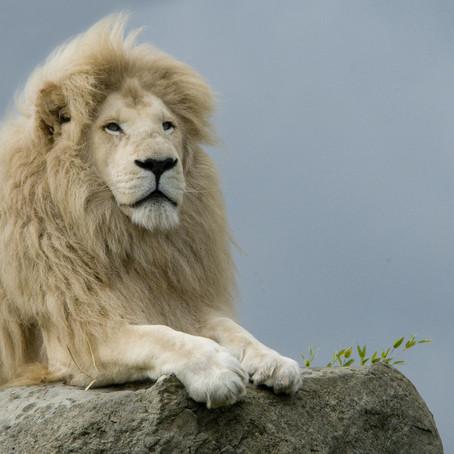 Isle of Wight Zoo, Sandown, Isle of Wight