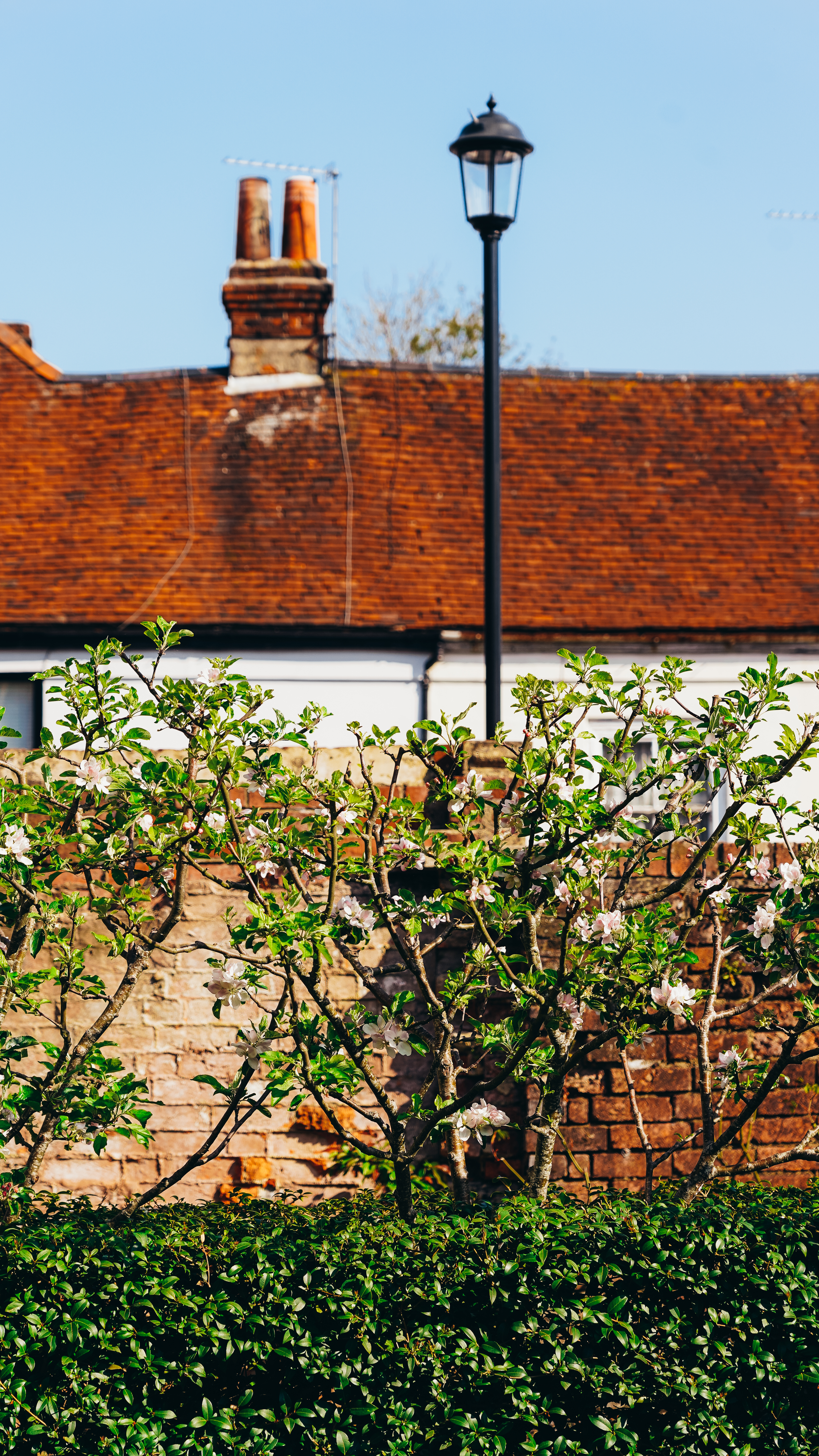 Lamppost and apple trees