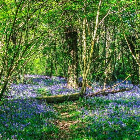 Borthwood Copse, Isle of Wight