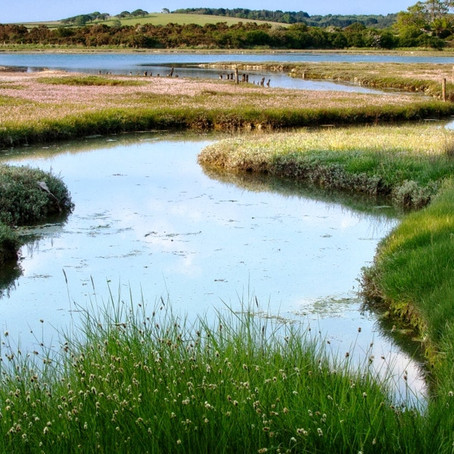 Newtown National Nature Reserve, Isle of Wight
