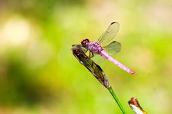 100-0018_IMG_Dragonfly