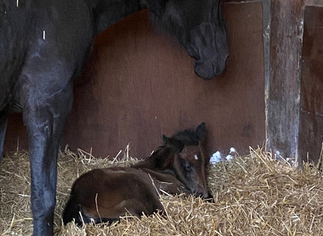 The first foal of the season has arrived!