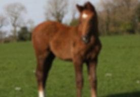 caerba foal 2.jpg