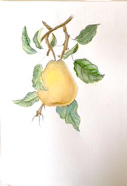 Pratt Pear