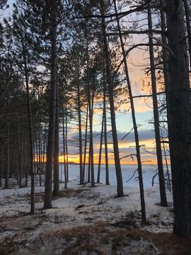 School Forest Sunset