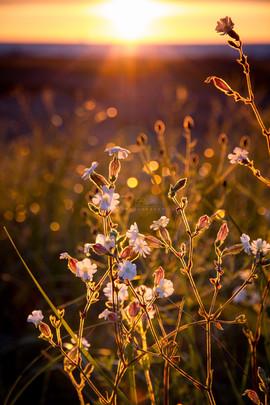 Spring in Grand Marais