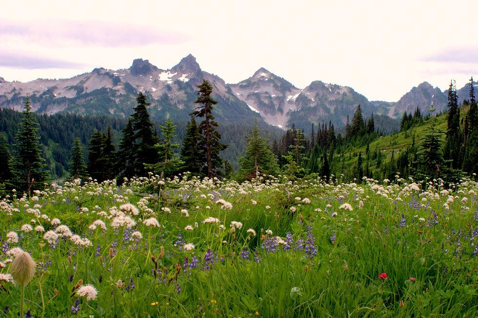 Canva - Tatoosh Mountains.jpg