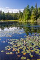 Lac du parc Algonquin / A lake in Algonquin park