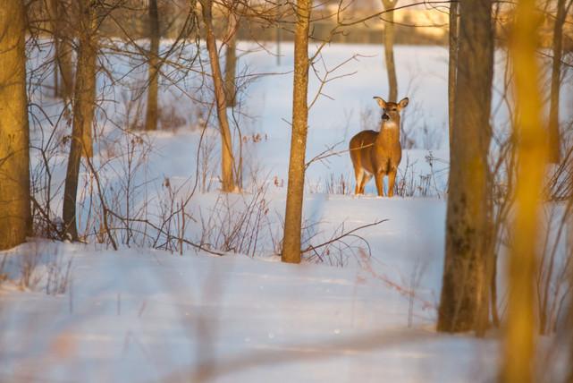 Au milieu des arbres et de la neige