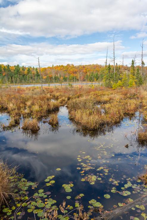 Dans les marais aussi l'automne est présent / Fall is also present in marshlands