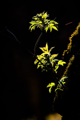 Vers la lumière black-background.jpg