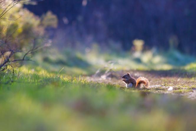 Ecureuil en sous-bois / Squirrel in the woods