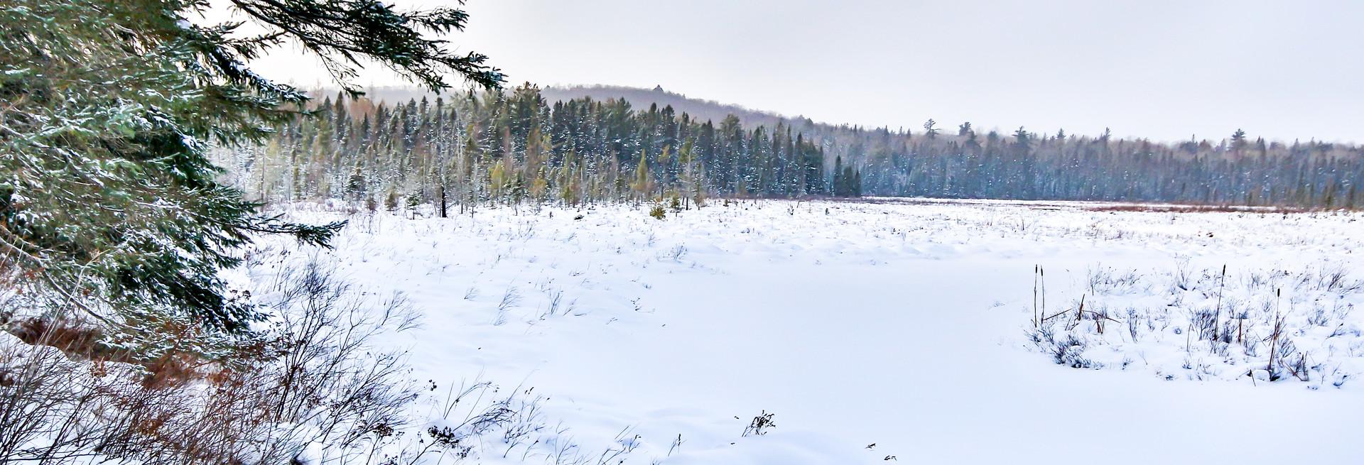Parc Algonquin sous la neige / Algonquin park under snow