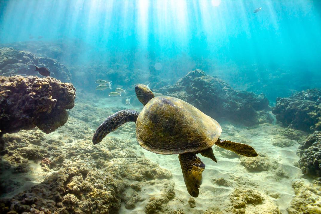 La tortue sainte / Saint turtle