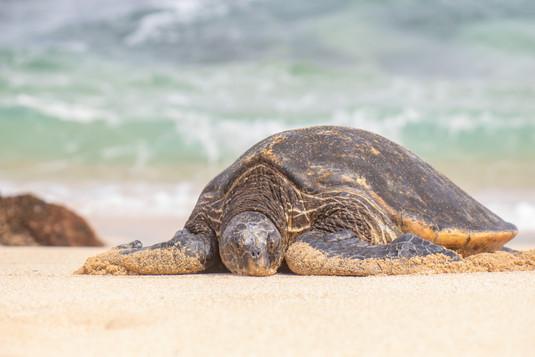 La mer, une tortue et le soleil / Sea, turtle and sun