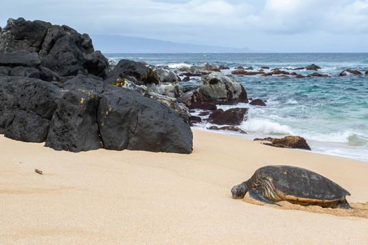 Une petite sieste sur la plage / A quick nap on the beach