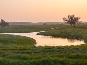 Marais abandonnés
