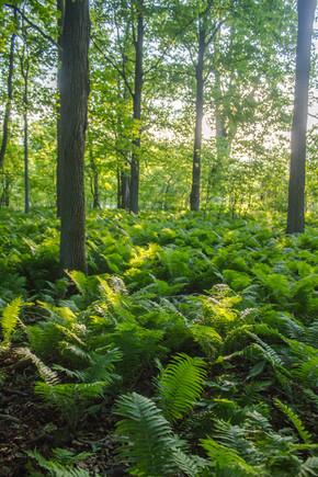 Forêt verdoyante / Green forest
