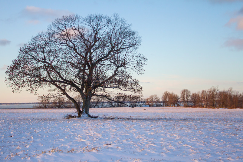 Tout seul au milieu de la neige / Alone in the snow
