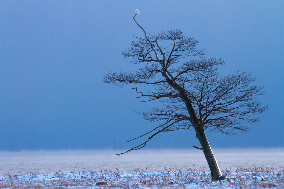 L'arbre et l'oiseau/The tree and the bird
