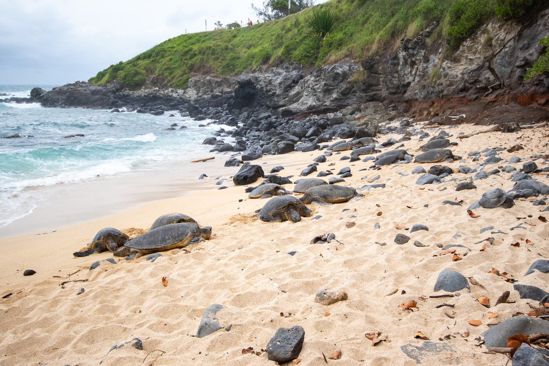 Comme des rochers / Like big rocks