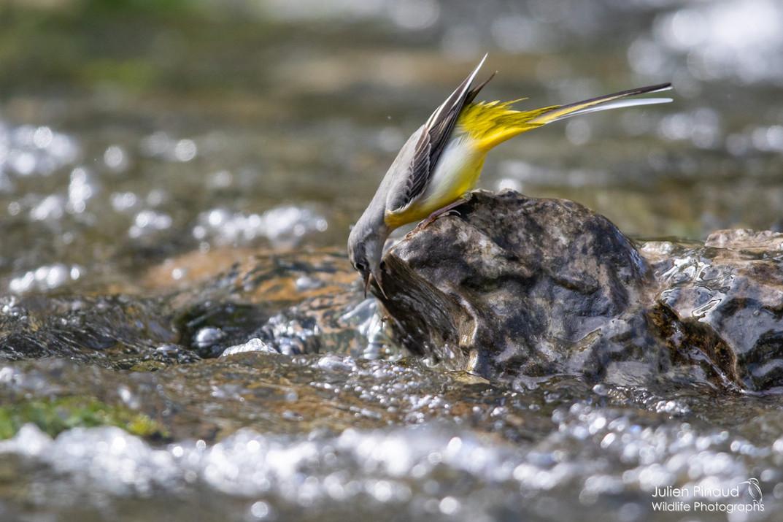 Pêche à la volée