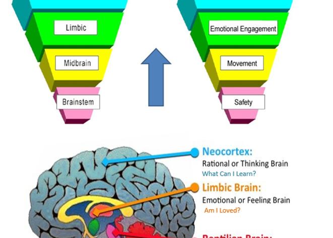 Brain reg.png