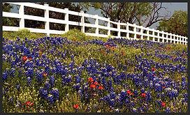 Garage Door Spring Replacement, Spring, TX Torsion Spring, Extension Spring