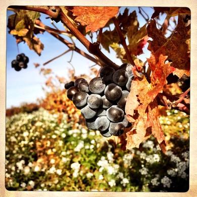 raisin-automne-galevan