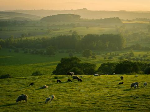 Solar Panels and Lambs