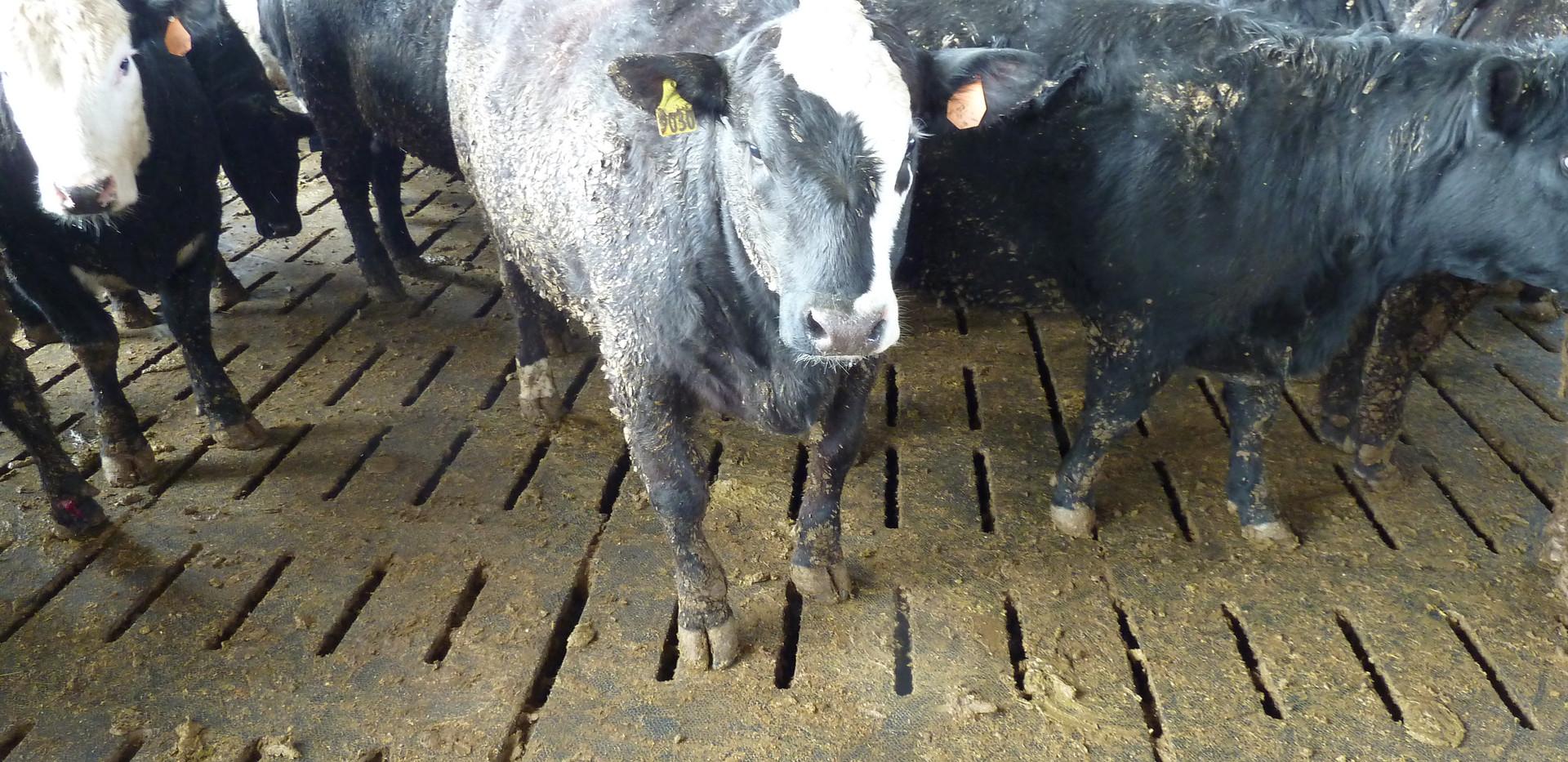 Animat Maxgrip Livestock Mat