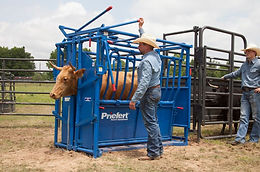 """The S0191 is """"The Rancher"""" squeeze chute with the Model 91 headgate, which operates in manual or automatic mode, making this a popular choice for ranchers."""