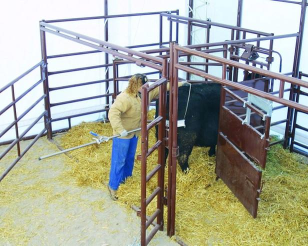 classic-calving-pen3jpg