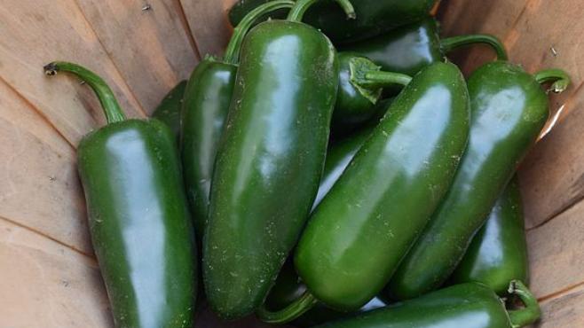 Giant Jalapeno Pepper