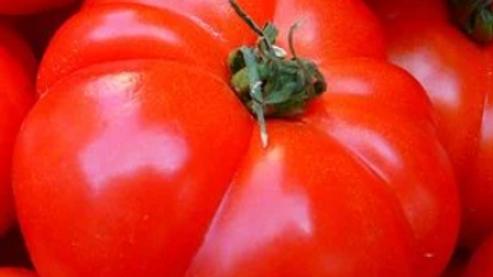 Garden Leader Monster Tomato