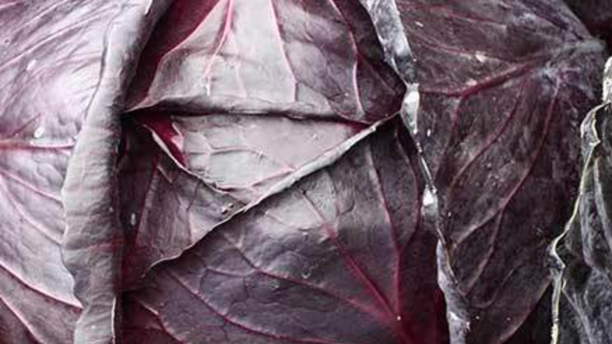 Seeds: Red Acre Cabbage