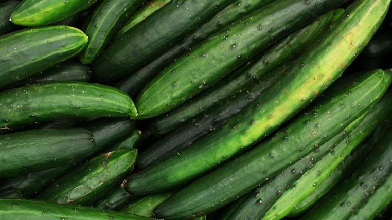 Burpless, Cucumber