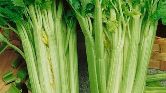 Seeds: Tall Utah, Organic Celery Seeds