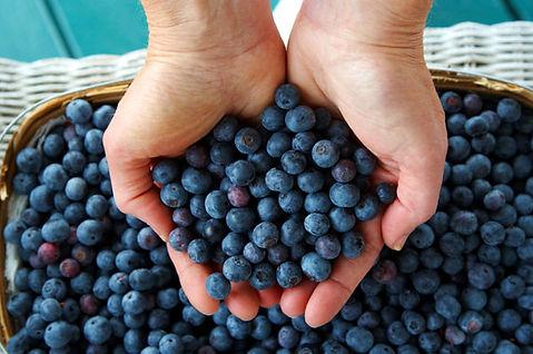 pick-blueberries hands.jpg