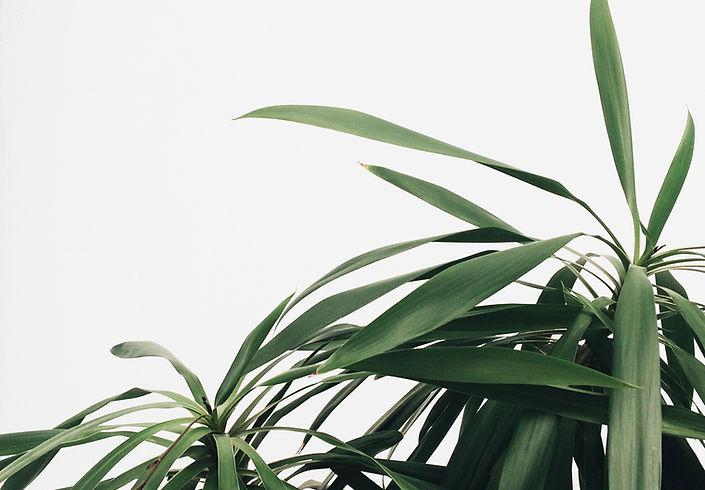 Green Plants