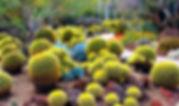 Cactus-Garden.jpg