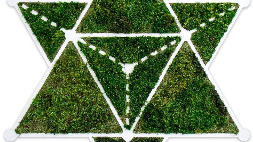 Yosun tetrahedron