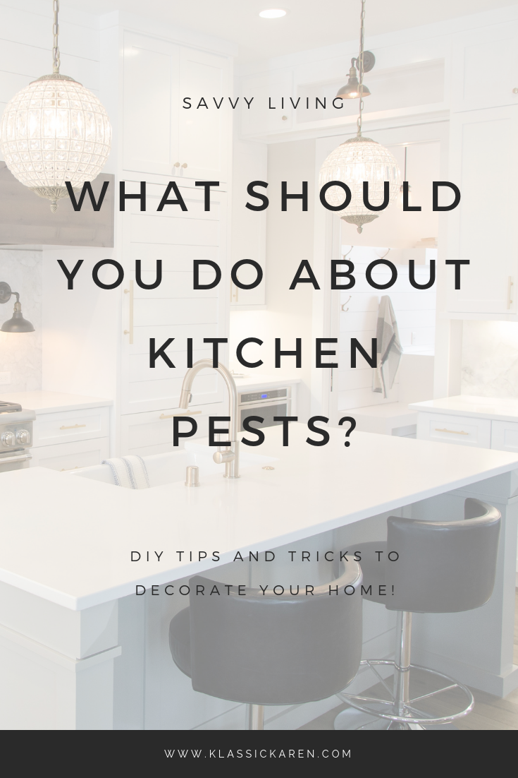 Klassic Karen on what should you do about kitchen pests