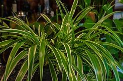 DIB_03_house plants-18 kopie.jpg