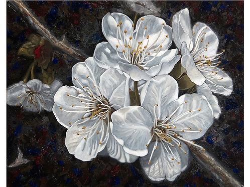 Fine Art Print - White Cherry Blossom - Illuminating Shadows