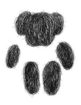 hairy bear-2.png