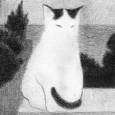 cat29.jpg