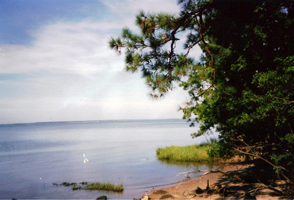 river image.jpg