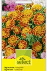 Tagetes 'Honeycomb' Sammetblume nieder gef