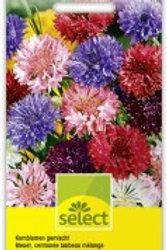 Centaurea Kornblumen gefüllt gemischt